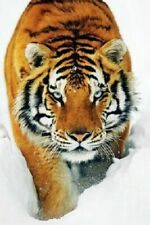 TIGER PROWLING IN SNOW ~ 24x36 Nature Poster ~ Tigers Cat Animals