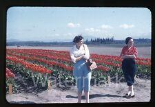 1950s red border Kodachrome  Photo slide ladies in a flower field