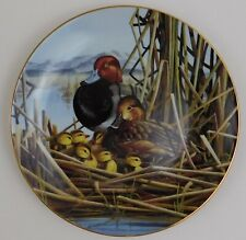 Bruce Langton Safe and Sound Redhead Ducks Plate A Loving Look Duck Families