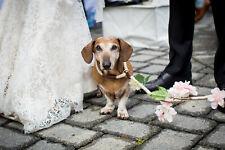 Silk Flower Dog Leash