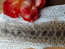 X No. 102 Real Taxidermy Ratsnake Rat Snake Colubrid Reptile Untanned Raw Skin