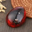 Real Specimen red resin butterfly taxidermy paperweight natural insect decors
