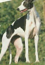 GREYHOUND - Breed Information - The World of Dogs **VERY GOOD COPY**