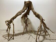Talawa Wurzel ähnlich rote Moorwurzel, Moorkien,Mangrove #634 65x38x53cm