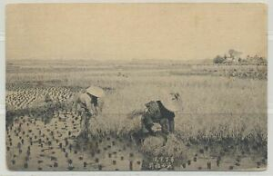 Japan Working in Rice Field on c. 1915 Vintage Real Photo Postcard
