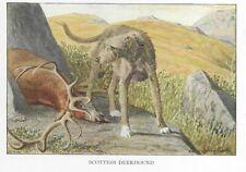 Scottish Deerhound - 1927 Color Dog Art Print - Matted