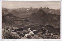 Ansichtskarte Allgäuer Alpen mit Blick vom Nebelhorn - Panorama - schwarz/weiß