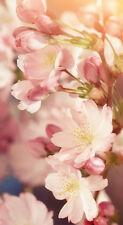 """Infrarotheizung Elegance - Glas rahmenlos, 600 Watt, Motiv """"Kirschblüten hoch"""""""