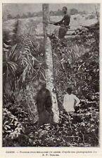 GABON PROCEDE POUR ESCALADER ARBRE CLIMBING A TREE IMAGE 1903 OLD PRINT