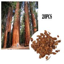 20Pcs Giant Tree Coast Redwood Sequoia Red Cedar Plant Seeds Garden Yard Decor A