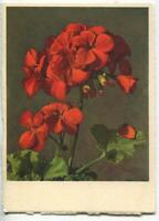 VINTAGE RED GERANIUMS LEAF FLOWERS SMALL LITHOGRAPH SWITZERLAND COLOR ART PRINT