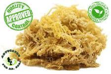 Alkaline® Irish Moss Sea Moss 1 lb Whole Leaf | Raw WildCrafted Superfood