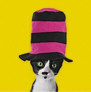 Dapper Cat in a Hat Luxury Pop Art Blank Greeting Card Birthday Pet Lovers