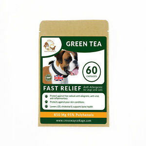 Immunity Supplement for Dogs & Cats - Organic Green Tea Vitamins 60 Capsules