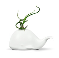 Ceramic Whale Mini Air Plant/Succulent Holder Regular Tabletop Decoration 3 Inch