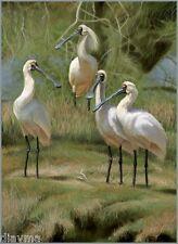 © ART - Royal Spoonbill Bird Illustration Wildlife Original artist print by Di