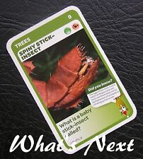 Woolworths<AUSSIE ANIMALS><Series 2 Baby Wildlife>CARD 9/36 Spiny Stick-Insect