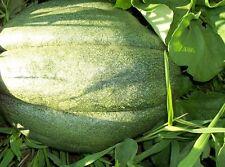 ' Cantaloupe- Giant NC Melon Vegetable Seeds 35/40 ct  (1g) easy grow