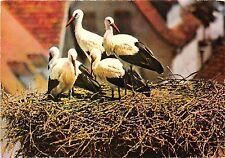 BF40004 nid de  cigogne en alsace stork france  bird oiseau