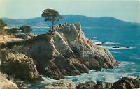 Chrome Postcard CA L151 Midway Point Lone Cypress Monterey Cypress Point Lobos