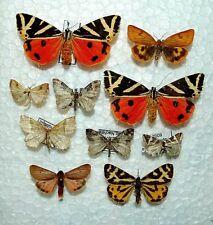 Moth Mix,Europa 22,rare