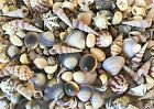 SHELLS SMALL ASSORTED 300g for craft,wedding,home, aquarium decoration