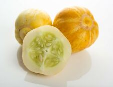 40 Seeds Lemon Cucumber 1890 Heirloom Unique Tasty