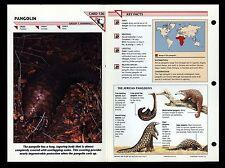 """Pangolin"" Wild Life Fact File Animal Card/Home School Study"
