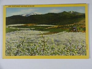 c1950 Curt Teich Linen Postcard Northwest Apple Orchard In Bloom Portland OR USA