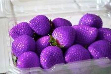 Purple Fruits Strawberry Strawberries Seeds 30+ Seeds Uk Stock BUY 2 GET 1 FREE