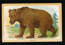 Animals THE BROWN BEAR Tuck Educational Used 1914 PPC