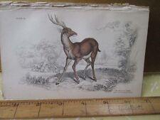 Vintage Print,RUSA OR TIMOR,Jardine,c1840,Mammalia