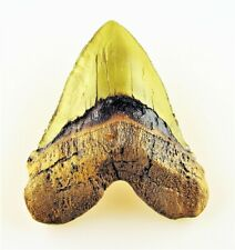 Megalodon Zahn Replik, Haizahn shark tooth replica