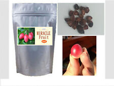 50 Seeds Miracle Fruit (Synsepalum dulcificum),Organic Grown Plants Freeshipping