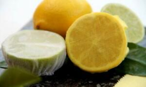 100pcs Muslin Elasticated Lemon Covers - Pip Stoppers Fish Meat Yellow White