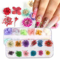 3D Real Dried Dry Flowers Nail Art Decoration Design DIY UV Gel Tips Manicure