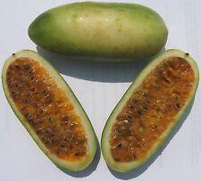 25 Seeds Semi Banana passionfruit Passiflora mollissima Tumbo Curuba