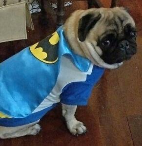 DC Comics Batman dog costume jacket shirt 35cm - New with removable cape
