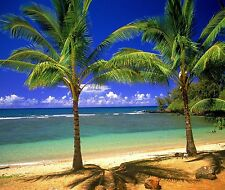 TROPICAL PALM TREE IN PARADISE #3  IMAGE HOME  DECOR COMPUTER MOUSE PAD 9 X 7