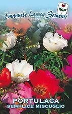 50 Semi/Seeds PORTULACA Grandiflora Semplice Miscuglio