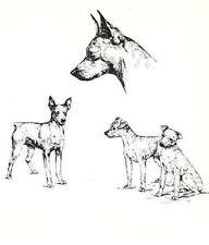 Miniature Pinscher - 1963 Vintage Dog Print - Matted *