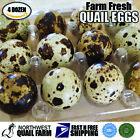 Fresh n Tasty Quail Eggs (4 dozen) with Quail Scissor