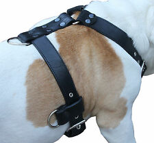 "Genuine Leather Dog Harness X-Large 33""-40"" Chest 1.3"" wide, 5 Adjustable Straps"