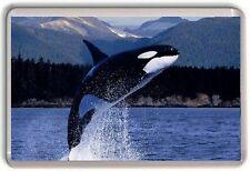 Killer Whale Orca Fridge Magnet 01