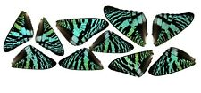 10 PIECES ASSORTED GREEN SUNSET MOTH URANIA BUTTERFLY WINGS WHOLESALE LOT MIX