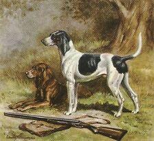 * American Foxhound - Vintage Dog Print - 1942 Megargee