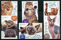 Romania Cats Stamps 2020 MNH Persian Siamese Sphinx British Shorthair Cat 6v Set