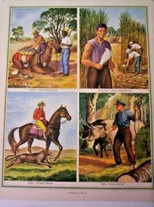 Vintage Colour Print Australian People Lithograph Poster 1950s 82