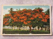 Vintage 1930s Postcard: Royal Poinciana Tree, Florida FL