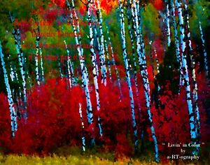 """Livin' In Color"" Birch Grove C-B&W ArtPhoto, Dig-FILES, Prints, FrameReady LtEd"